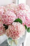 Beautiful hydrangea flowers in a vase on a table . Bouquet of light pink flower. Decoration of home. Wallpaper and. Background Stock Image