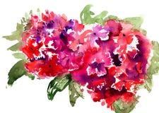 Beautiful Hydrangea red flowers Stock Photos