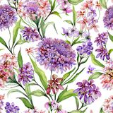 Beautiful iberis flowers with green leaves on white background. Seamless floral pattern. Watercolor painting. Hand painted illustration. Can be used for fabric Royalty Free Stock Image