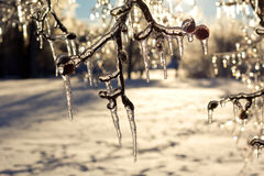 Beautiful ice coated trees after an extreme ice storm. Royalty Free Stock Images