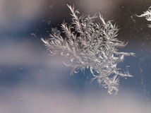 Beautiful ice flowers on the window Stock Photography