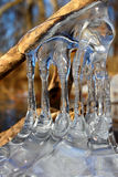 Beautiful Ice Formations Illinois. Natural ice sculptures along the Kishwaukee River in northern Illinois Royalty Free Stock Photo