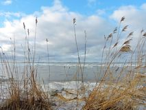 Reed and Curonian spit in winter ice, Lithuania Royalty Free Stock Images