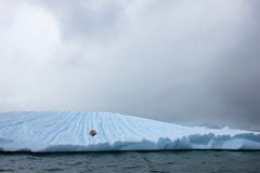 Beautiful iceberg or ice floe with a seal, Antarctic ocean Royalty Free Stock Image
