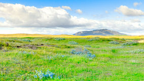 Beautiful Icelandic landscape. Meadow with mountains, blue sky and clouds. Royalty Free Stock Images