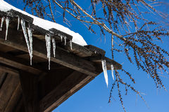 Beautiful icicles Royalty Free Stock Photo