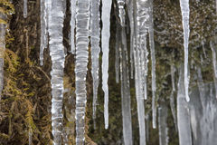 Beautiful icicles in river cascade Royalty Free Stock Photo