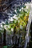 Beautiful icy spring in sunny day. Close-up ice growths stock images