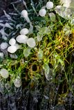Beautiful icy spring in sunny day. Close-up ice growths stock photo