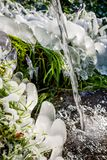 Beautiful icy spring in sunny day. Outdoor stock photo