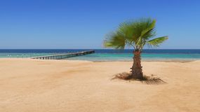 Idylic hotel beach with palm trees, Red Sea, Egypt stock photography