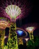 Beautiful illuminated supertree building in Singapore Royalty Free Stock Photos