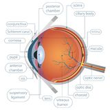 A beautiful illustration of an eye royalty free illustration