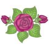 Beautiful illustration of pink rose Stock Photos