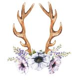 Watercolor anemone flowers, hyacinth and antlers. Beautiful illustration with the watercolor anemone flowers, hyacinth and antlers. Floral composition in boho Royalty Free Illustration