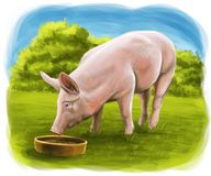 The pig eats on the farm stock illustration