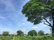 The beautiful image of big tree and blue sky Stock Photos