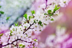 Beautiful image of blooming tree branch stock images