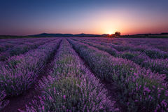 Beautiful image of lavender field. Summer sunrise landscape, contrasting colors. Beautiful clouds, dramatic sky. Lavender fields. Beautiful image of lavender royalty free stock photo