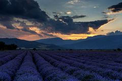 Beautiful image of lavender field on sunset Royalty Free Stock Photos