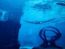 Manta ray with Atlantean ruins stock image