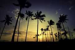 Beautiful image silhouette of palm tree at the beach Stock Images