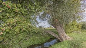 Beautiful image of a tree leaning over a streamlet with green vegetation royalty free stock image