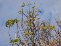 Parrots on the branches of a tree with blue sky background royalty free stock images
