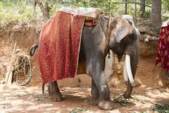The beautiful Indian elephant with a seat for passengers costs waiting for people Royalty Free Stock Photo