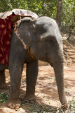 The beautiful Indian elephant with a seat for passengers costs waiting for people Stock Images