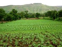 Beautiful Indian farm landscape Royalty Free Stock Image