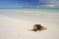 Beautiful Indian Ocean Royalty Free Stock Photo