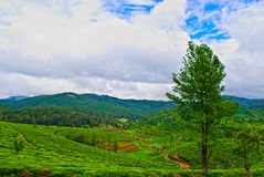 Beautiful Indian Tea Estates Stock Images