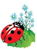 Beautiful insect Stock Photos