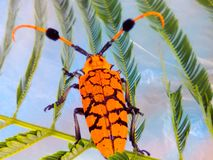 Beautiful insect. Animal exotic and rare in nature on white background Royalty Free Stock Photo