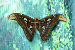 Beautiful insect butterfly Royalty Free Stock Images