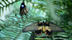 Beautiful insect butterfly on leaves stock video footage