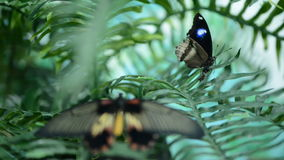 Beautiful insect butterfly on leaves stock footage