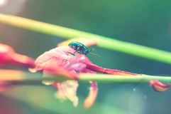 Beautiful insects on a flower close-up, glowing background, sunlight.  Stock Image