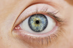 Beautiful insightful look blue woman`s eye Stock Images