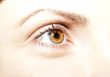 Beautiful insightful look brown eyes.  Stock Photography