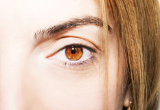 Beautiful insightful look brown eyes Royalty Free Stock Image