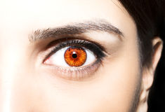 Beautiful insightful look brown eyes.  Stock Images