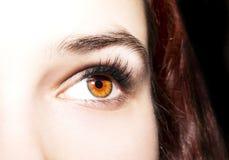 Beautiful insightful look brown eyes Stock Photos