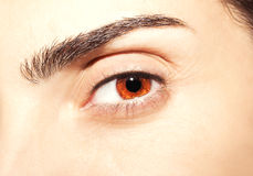 Beautiful insightful look brown eyes.  Royalty Free Stock Photography