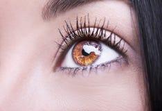 Beautiful insightful look brown woman`s eye Royalty Free Stock Photos