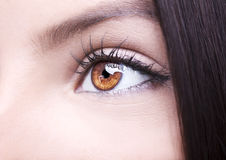 Beautiful insightful look brown woman`s eye Stock Photography