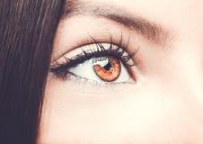 Beautiful insightful look brown woman`s eye. Beautiful insightful look brown woman`s eye Stock Images