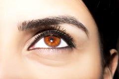 Beautiful insightful look brown  woman`s eyes Stock Photos
