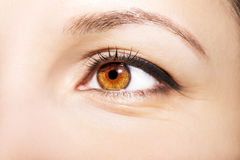 Beautiful insightful look brown woman`s eyes.  Royalty Free Stock Photo